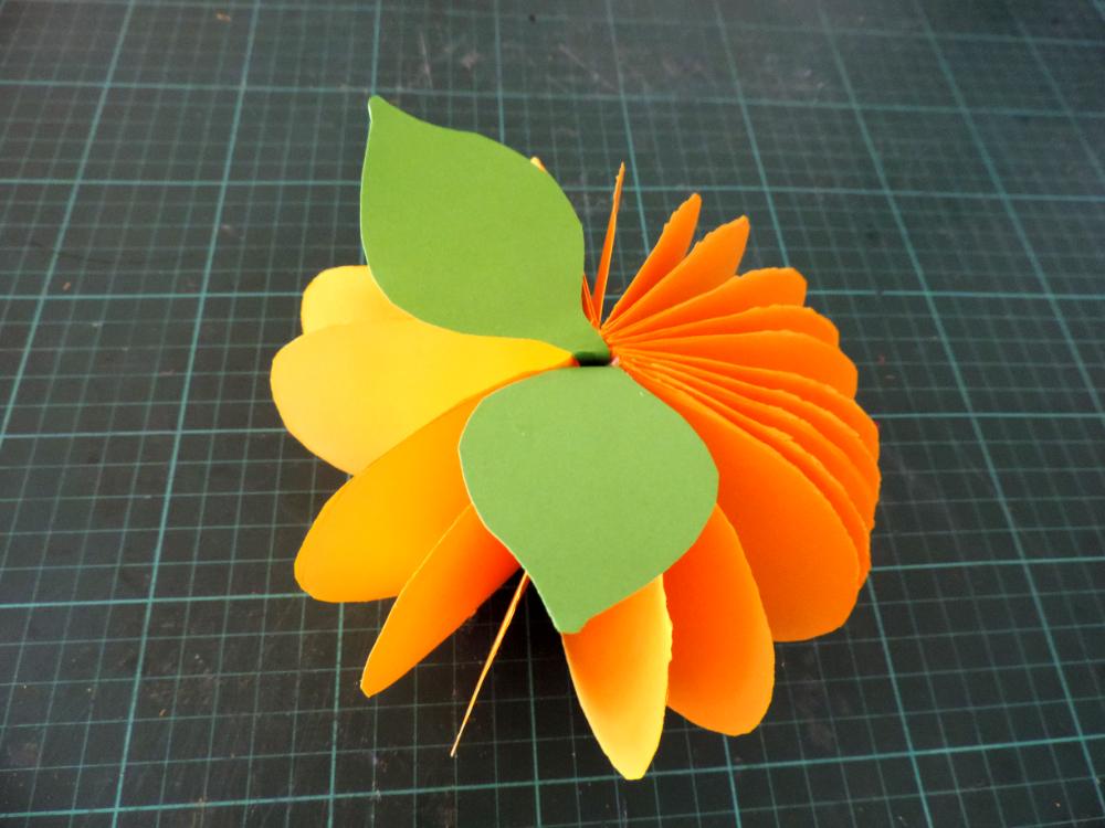 Der Kürbis bekommt Blätter